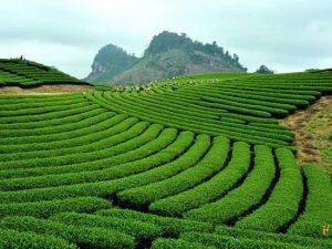 Tư vấn luật đất đai tại Lai Châu – Gọi 1900.6500 – Luật Toàn Quốc