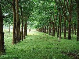 Tách thửa đất trồng cây lâu năm để tặng cho theo quy định pháp luật
