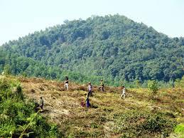 Chuyển nhượng đất rừng theo quy định của pháp luật