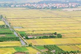 Đất được giao hiện nay thuộc trường hợp thuê đất