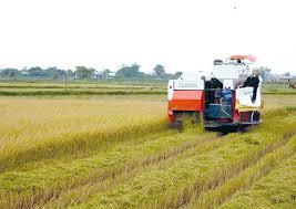 Đất nông nghiệp có được tiến hành tách thửa không