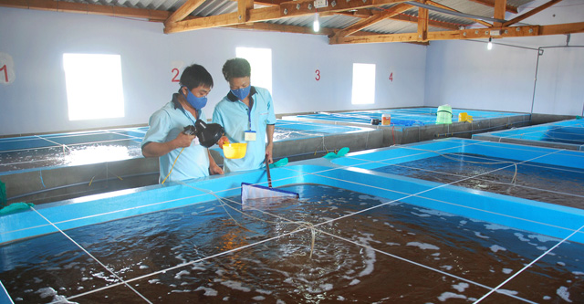 Điều kiện đối với sản xuất kinh doanh giống thủy sản
