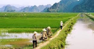 Thủ tục xin được gia hạn sử dụng đất nông nghiệp