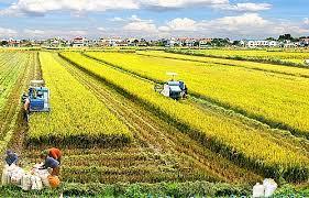 Đối tượng được miễn thuế sử dụng đất nông nghiệp năm 2017