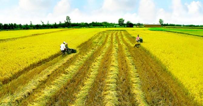 Hạn mức giao đất theo quy định của pháp luật