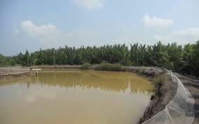 Sang tên quyền sử dụng đất thủy sản