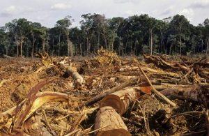 Tội vi phạm các quy định về khai thác và bảo vệ rừng