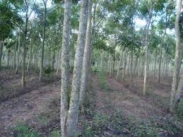 chuyển đất rừng sản xuất sang đất ở