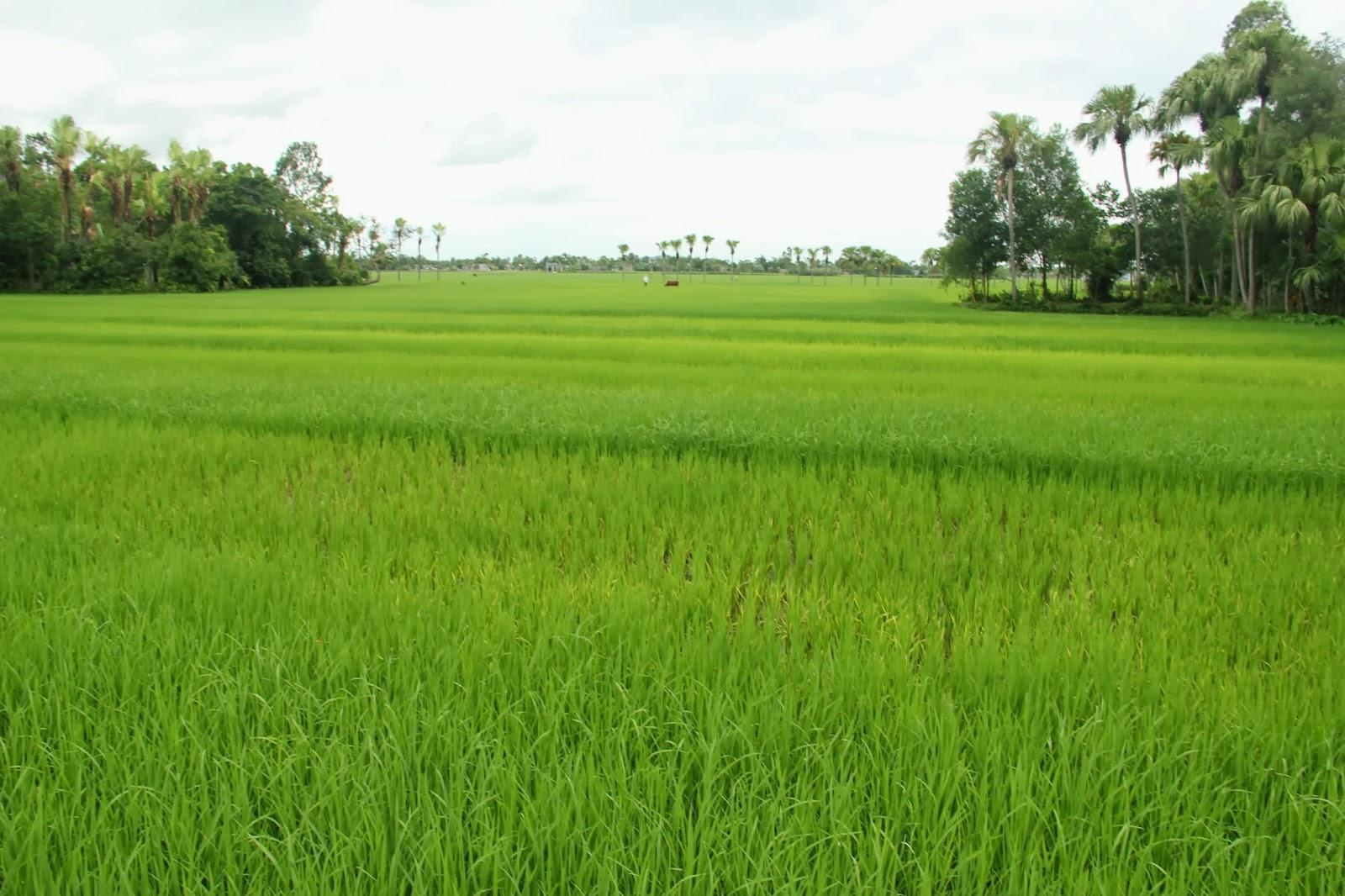 Bồi thường đất nông nghiệp