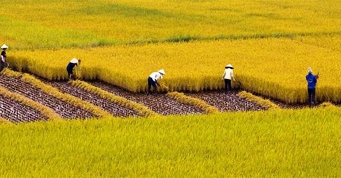 Đòi quyền lợi trong khi thực hiện mua bán đất trồng lúa