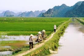 Thu hồi đất nông nghiệp vượt hạn mức