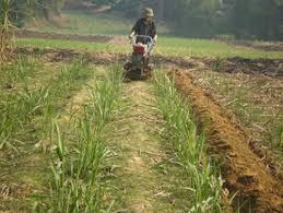 Chuyển mục đích sử dụng đất trồng cây hàng năm