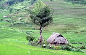 Tài sản bảo đảm là quyền sử dụng đất