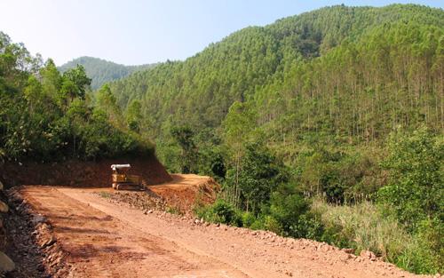 Chuyển nhượng quyền sử dụng đất là rừng sản xuất
