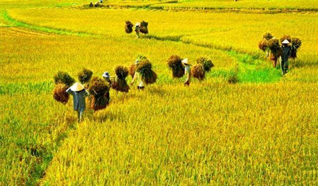 Thủ tục xác nhận tiếp tục sử dụng đất nông nghiệp của hộ gia đình cá nhân trực tiếp sản xuất nông nghiệp