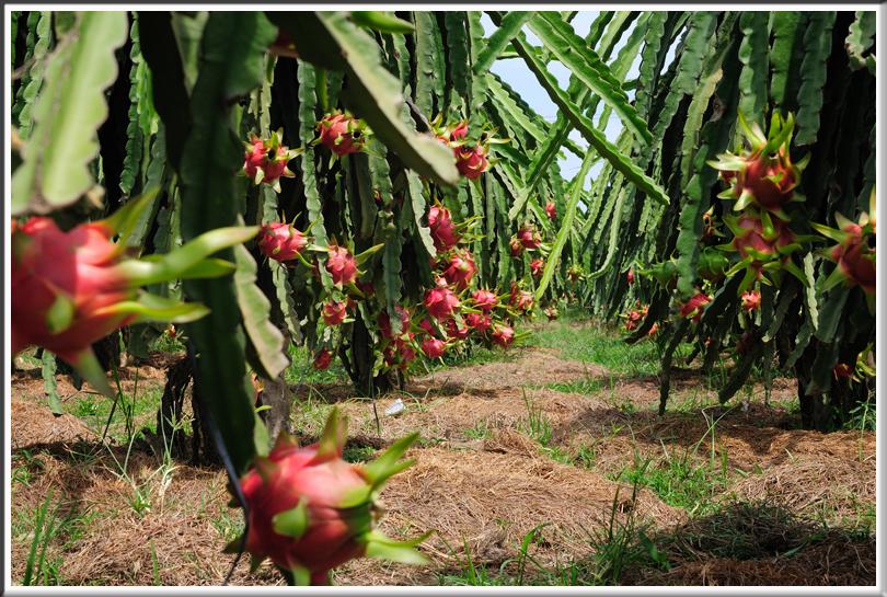 Bồi thường đối với cây trồng, vật nuôi khi Nhà nước thu hồi đất