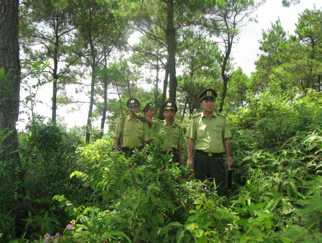 Hạn mức giao rừng cho hộ gia đình, cá nhân là bao nhiêu theo quy định pháp luật?
