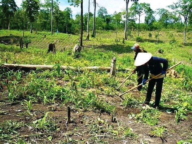 Tải mẫu đơn đề nghị thuê rừng dùng cho hộ gia đình, cá nhân