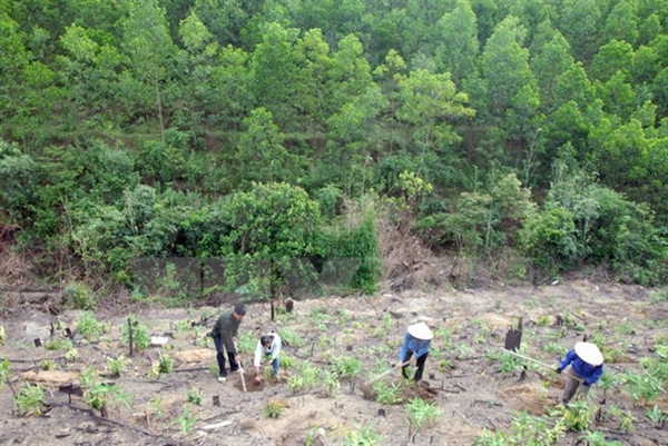 Tải mẫu kế hoạch sử dụng rừng dùng cho hộ gia đình, cá nhân