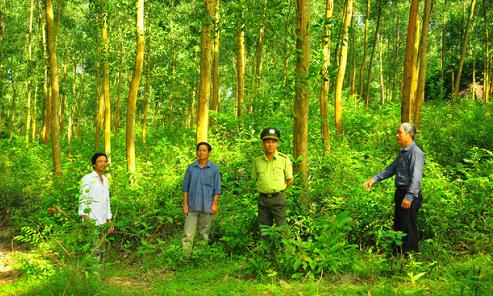 Quản lý quy hoạch, quản lý kế hoạch bảo vệ và phát triển rừng được quy định như thế nào?