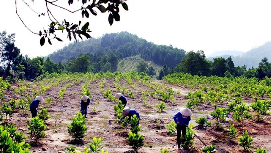 Mức phạt vi phạm quy định của Nhà nước về trồng rừng theo quy định pháp luật