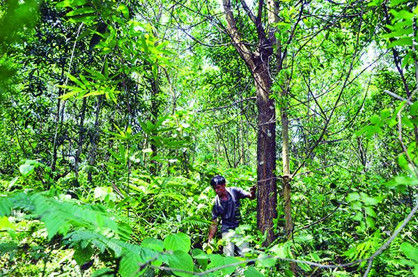 Hình thức khoán và hồ sơ khoán rừng, vườn cây và diện tích mặt nước