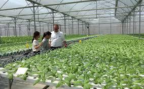 Trình tự, thủ tục và hồ sơ xin thuê đất thực hiện dự án sản xuất nông nghiệp
