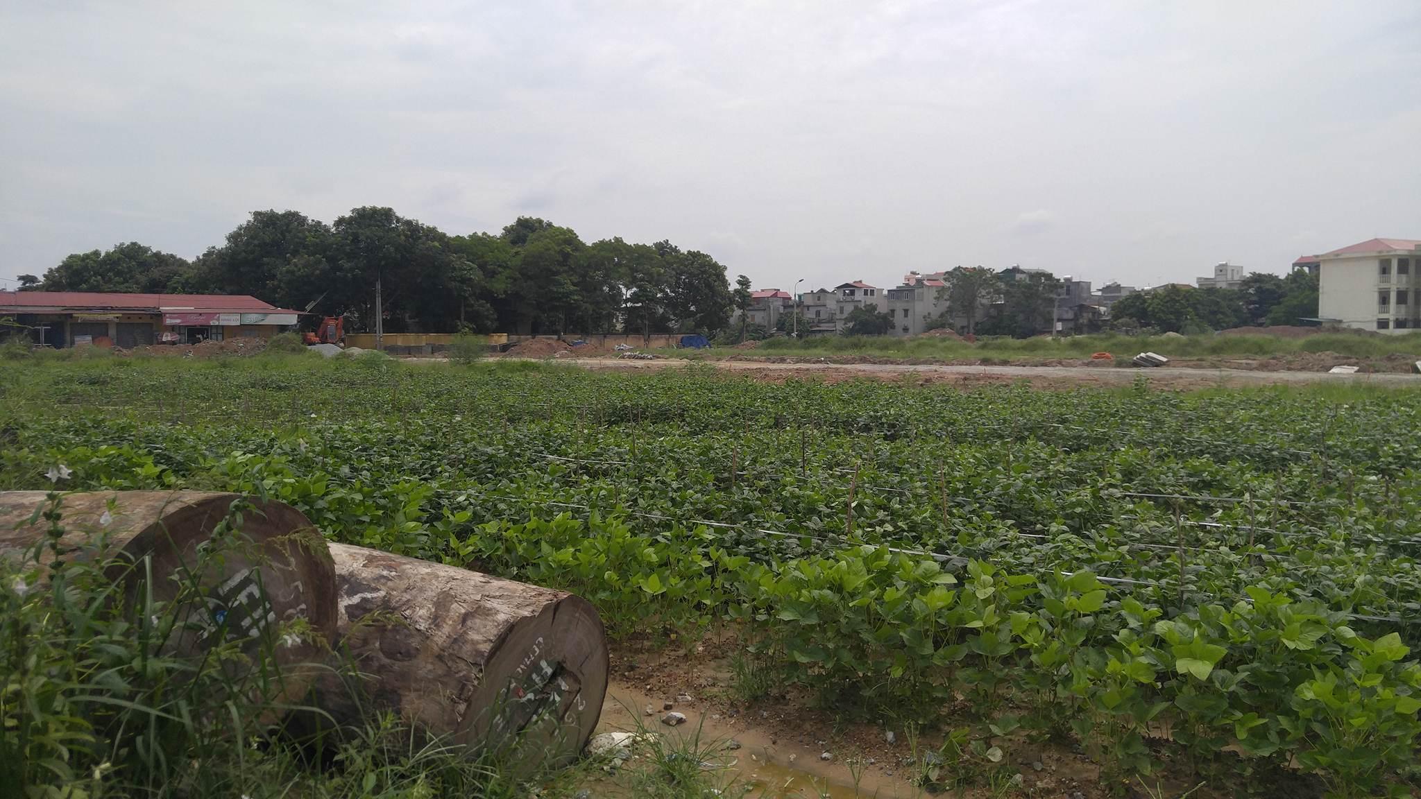 Xác định diện tích đất bồi thường khi thu hồi đất tại Bắc Ninh