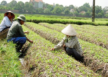 Hỗ trợ ổn định đời sống sản xuất tại Quảng Ninh