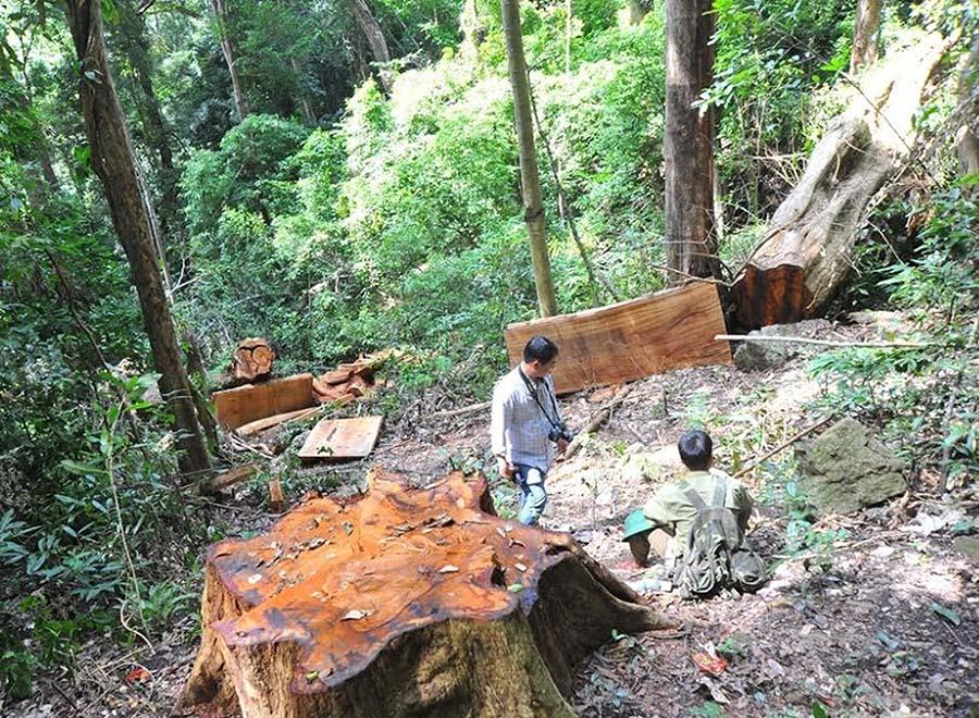Chuyển mục đích sử dụng rừng trái phép