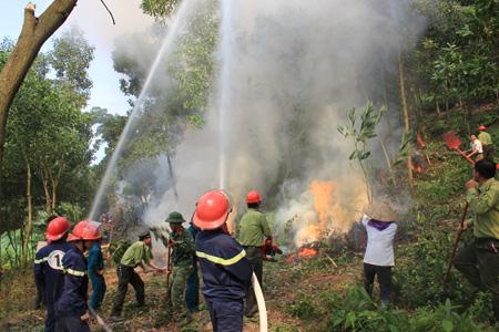 Quy định về phương án phòng cháy và chữa cháy rừng