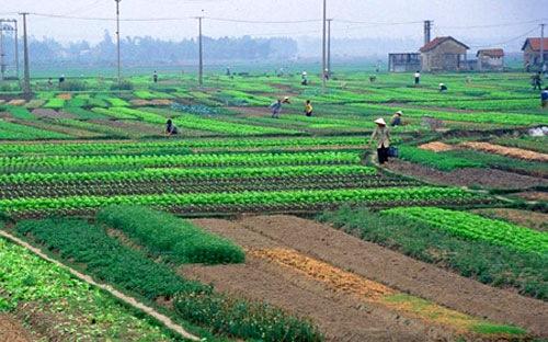 Căn cứ xác định quỹ đất nông nghiệp công ích của xã