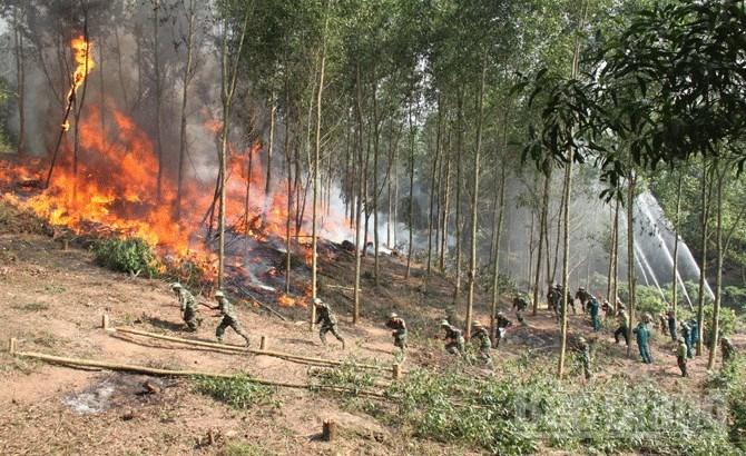 Quy định về trách nhiệm của các bộ trong phòng cháy và chữa cháy rừng