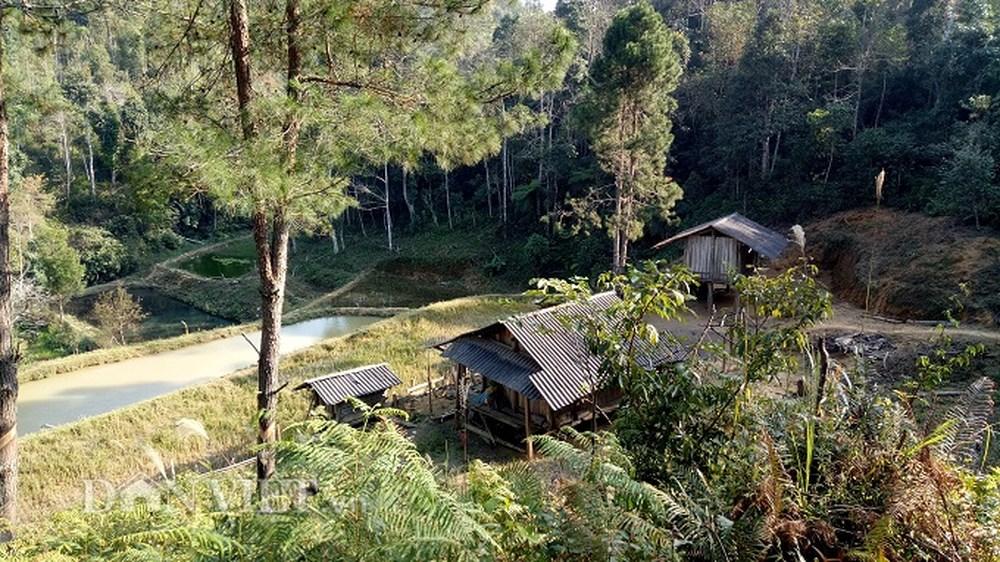 Quyền xây nhà ở trên đất rừng nhận giao khoán