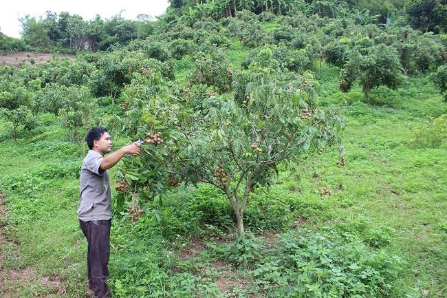 Bồi thường cây trồng vật nuôi tại Bình Phước