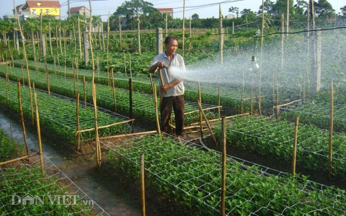Bồi thường cây trồng vật nuôi tại TP Hồ Chí Minh khi Nhà nước thu hồi đất
