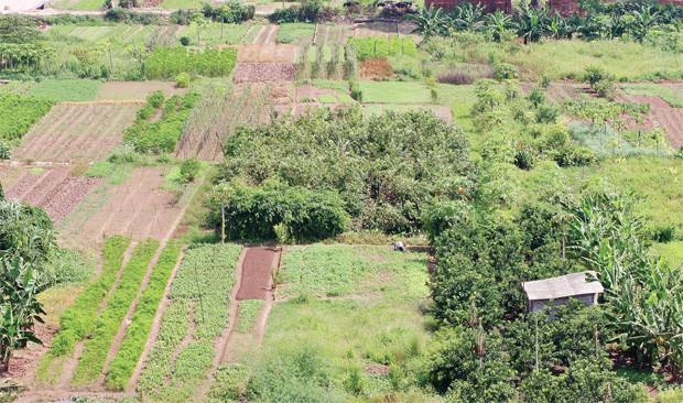 bồi thường khi thu hồi đất nông nghiệp tại Bình Phước