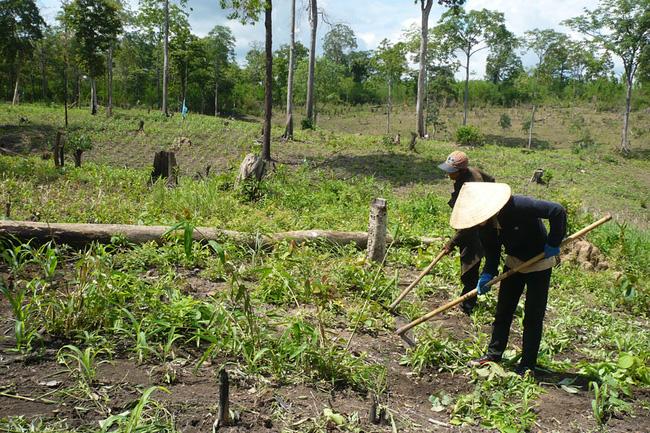 Thu hồi sổ đỏ đất canh tác đã cấp không đúng đối tượng sử dụng đất