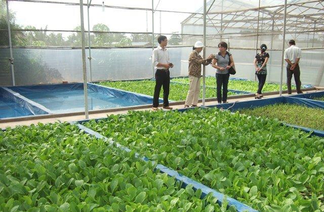 Thu hồi đất nông nghiệp tại TP Hồ Chí Minh