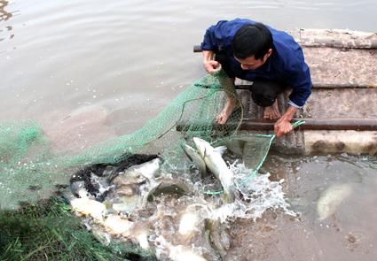 Bồi thường cây trồng vật nuôi tại Nghệ An khi Nhà nước thu hồi đất