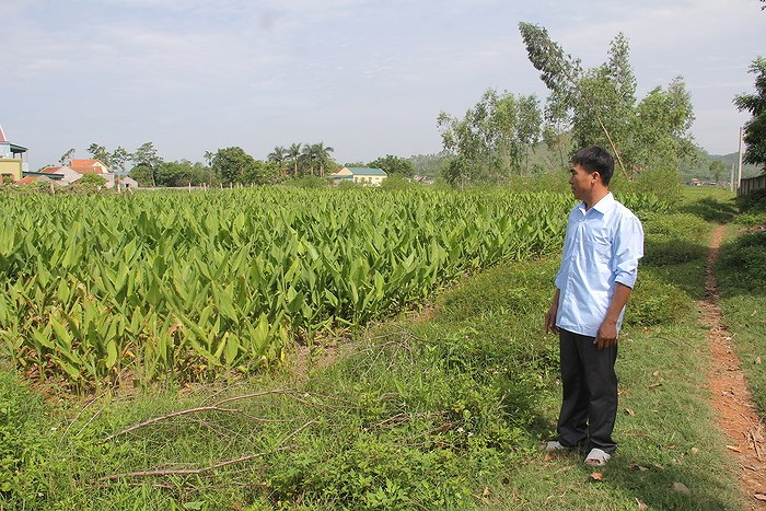 Bồi thường đất nông nghiệp tại Nghệ An
