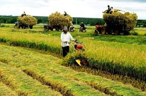 Hộ gia đình trực tiếp sản xuất nông nghiệp
