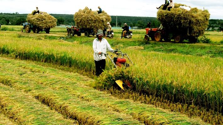 Hỗ trợ ổn định đời sống sản xuất tại Đà Nẵng khi Nhà nước thu hồi đất