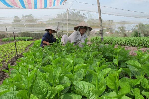 Hỗ trợ ổn định đời sống sản xuất tại Nghệ An khi Nhà nước thu hồi đất