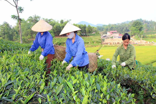 Hỗ trợ ổn định đời sống sản xuất tại Thái Nguyên