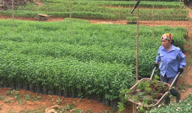 Bồi thường cây trồng vật nuôi tại Bình Thuận khi Nhà nước thu hồi đất