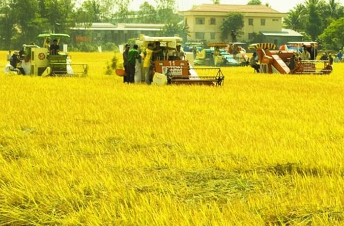 Bồi thường cây trồng vật nuôi tại Quảng Ngãi