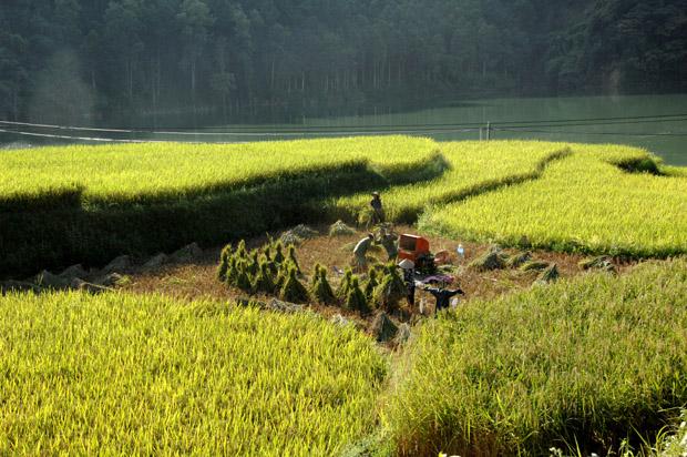 Bồi thường về mồ mả và bồi thường đối với cây trồng vật nuôi tại Hà Giang khi Nhà nước thu hồi đất