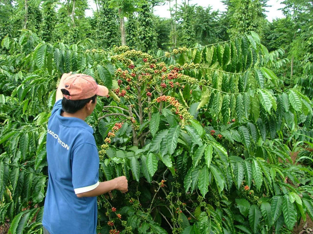 Hỗ trợ ổn định đời sống sản xuất tại Đắk Nông