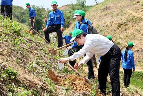 Phương án nộp tiền trồng rừng thay thế